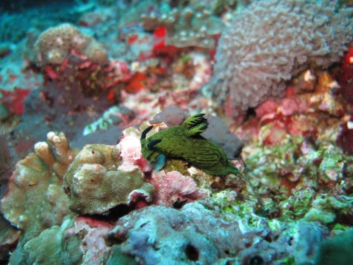 Dive Journal: Nusa Lembongan,Bali