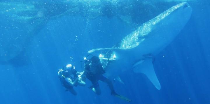 Dive Journal: Nabire, Papua Whale Sharks Expediton – Catatan Perjalanan Melihat Raksasa di TimurIndonesia